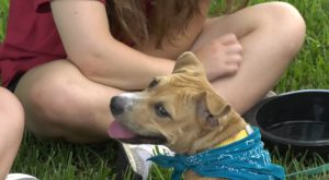 Smooches for Pooches helps Chi Omega raise money for Make-A-Wish.
