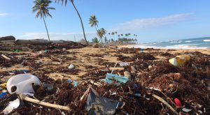Plastics pollution is a major problem facing the world, and TROY is using a new grant to research ways to combat it.